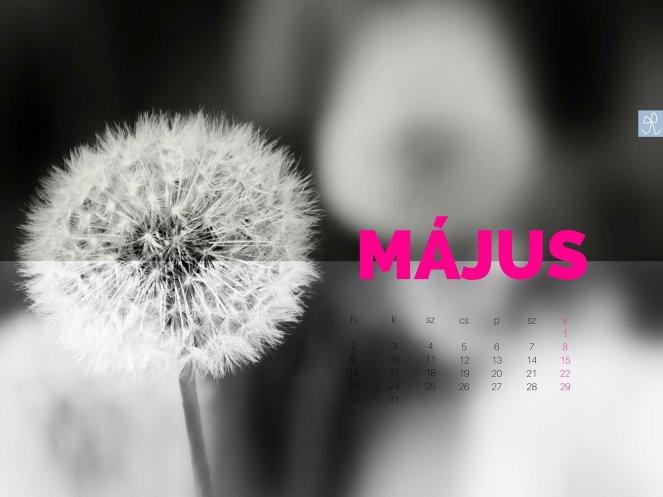 masni_2016_43
